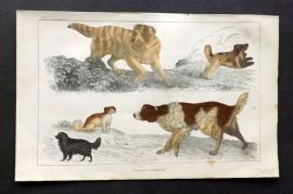 Goldsmith 1851 Hand Col Print. English Setter, Cocker, King Charles Dogs